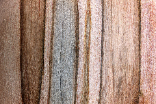 Textured Background of Dark and Light Striped Ambrosia Maple Wood