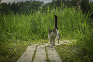 The cat with green eyes in green grass