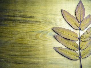 volumetric texture objects