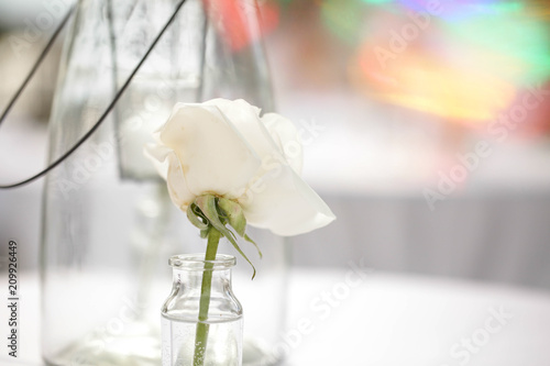 Simple Flower Vase Minimalist Stock Photo And Royalty Free Images