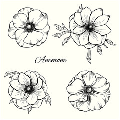 Anemone vector set in hand drawn style. Floral design set
