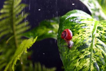 улитка на зеленом листе с каплями воды
