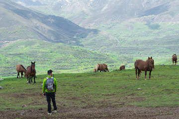 Penha Ubinha, Leon, Spain - June, 2018: Horses in Penha Ubinha valley. Penha Ubinha is, with 2,417 meters of height, one of the highest mountains of the Cantabrian mountain range, and it is also