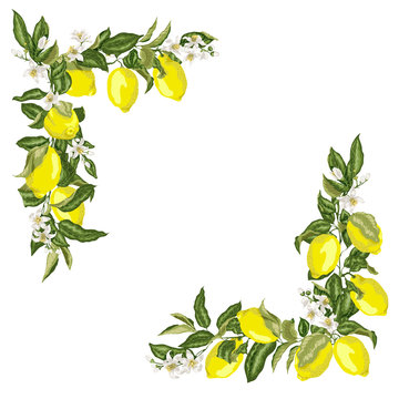 Set of corner square frame template with citrus lemon flower and fruits