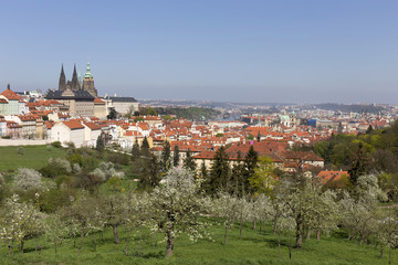 View on the spring Prague City with the green Nature and flowering Trees, Czech Republic