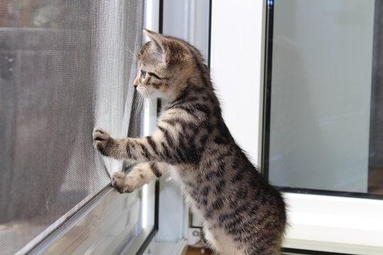 Kätzchen - Kitten