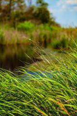 Tall Grass at Boat Dock