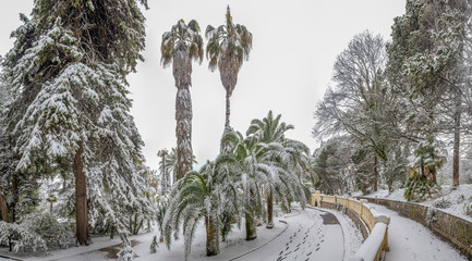 Tall palm trees in the Arboretum of Sochi. Russia Wall mural