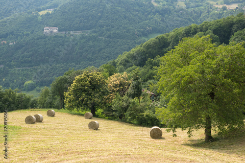 Drying And Harvesting Of Hay In The Mountains Hay Rolls