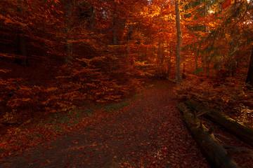 Deurstickers Rood paars Inside fairy tale romantic autumn forest