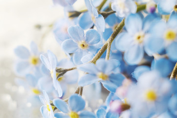 Fototapete - Flowers forget-me-not close-up, top view, flat lay. natural floral background, macro photo.