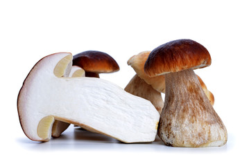 Edible mushroom Boletus isolated on a white background.