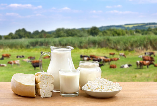 Milk, sour cream, cheese and cottage cheese on wooden table on background of meadow with cows