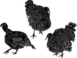 three turkey silhouettes isolated on white
