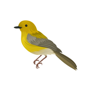 Detailed vector icon of yellow warbler. Small song bird with long tail and bright plumage. Ornithology or wildlife theme