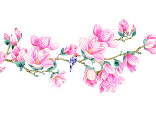 Magnolia flower illustration