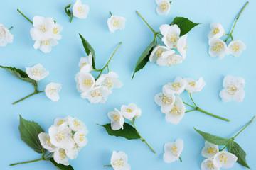 Fototapete - Jasmine flowers pattern top view, flat lay.