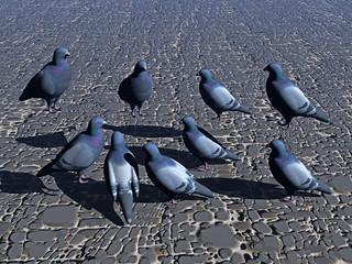 Tauben auf der Straße