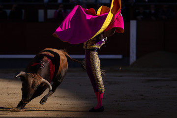Evening of bulls in Spain