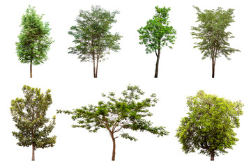 Isolated trees collection on white background