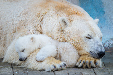 Tuinposter Ijsbeer Polar bear with cub