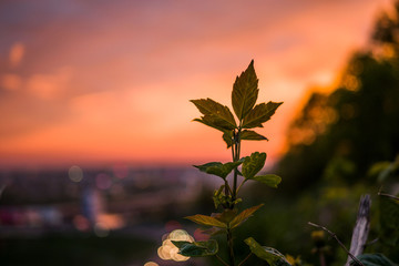 A young tree sprout at sunset in a warm spring afternoon