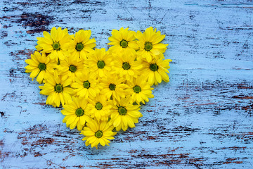 Golden-daisy flowers in heart shape on blue painted wooden background