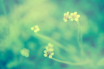 Soft focus Grass Flower  abstract spring ,nature ,relax  outdoor  photo background