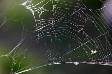 abstract spider web background