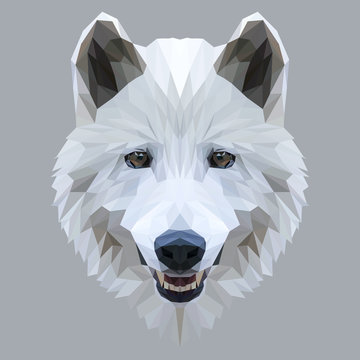 Wolf low poly design. Triangle vector illustration.