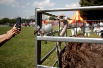 An ostrich is seen in a pen on the Invalides Esplanade in Paris during a demonstration held by a group of fairground and circus workers that support the use of animals in their shows, and protest against the cancellation of circuses