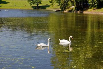 Foto op Plexiglas Zwaan Deux cygnes dans un lac