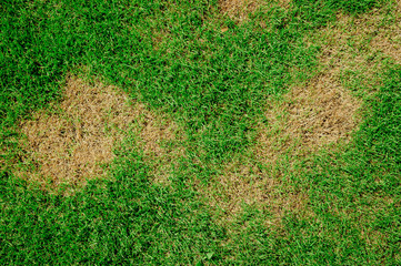 Fotobehang Gras Grass texture. grass background. patchy grass, lawn in bad condition and need maintaining.