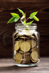 Plant growing in coins glass jar for money