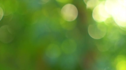 Wall Mural - Summer abstract green blurred background. Nature. Slow motion 4K UHD video 3840X2160