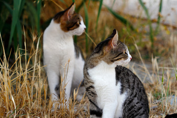 Portrait of two feral multicolored cats in the countryside