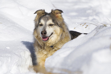 Large Dog in Snow