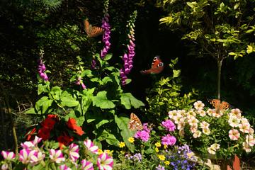 Schmetterling 501