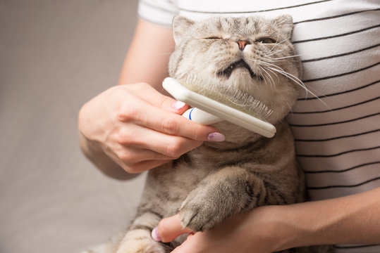 Woman combing a cute cat with a brush on the couch, close up