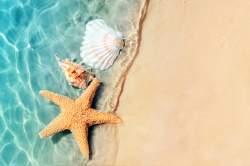 Photo sur Aluminium Plage starfish and seashell on the summer beach in sea water.