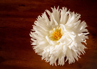 Fluffy white dahlia on a wooden background.