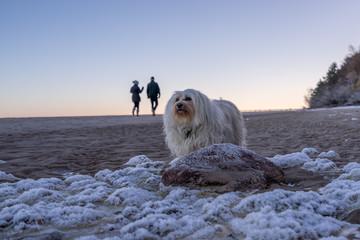 Hund am winterlichen Strand
