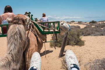 Foto en primera persona de un paseo en camello