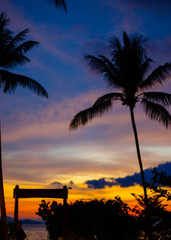 shadow of coconut tree on beach