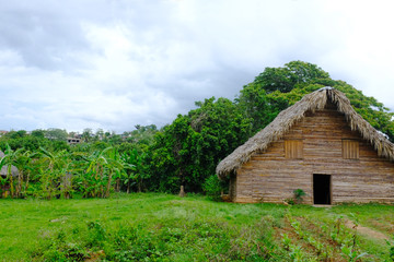 Vinales, Cuba, House drying tobacco leaves