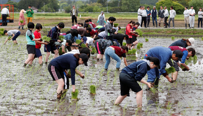 Tourists from Tokyo's universities, plant rice seedlings in a paddy field, near TEPCO's tsunami-crippled Fukushima Daiichi nuclear power plant, during a rice planting event in Namie town