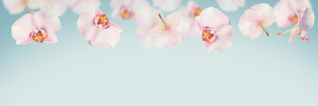 Blue tropical summer background with falling orchids flowers
