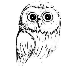Vector illustration of an owl with big eyes drawing an ink graphic