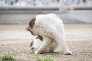 毛づくろい 猫