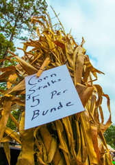 Bundle of Dry Corn Stalks for Sale at a Texas Flea Market. Sheaf of stems and leaves of agricultural plant and label with price in autumn 2017.